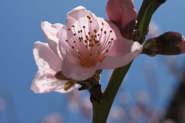 Chinese Herbal Medicine - Blog